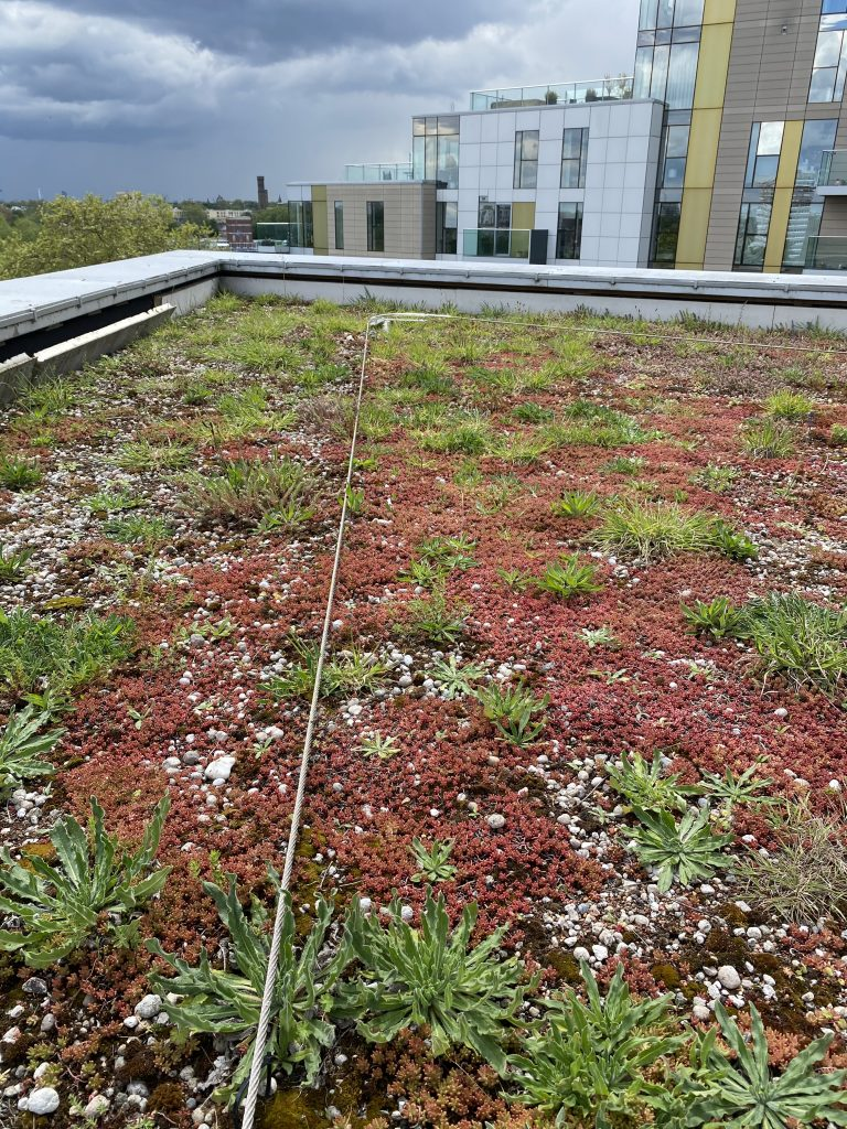 Safety line at woodberry down on green roof